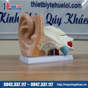 Mô hình giải phẫu tai người phóng đại 5 lần
