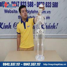 Mô hình giải phẫu hệ xương người 85cm