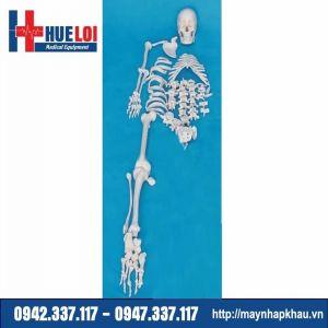 Mô hình toàn bộ xương người tách rời được từng chiếc