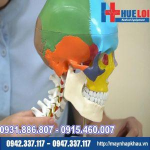 Mô hình giải phẫu xương đầu mặt cổ
