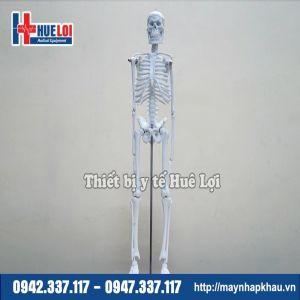 Mô hình giải phẫu hệ xương người 45cm