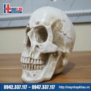 Mô hình giải phẫu xương sọ